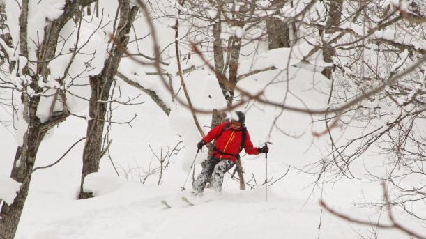 Treeskiing - jazda w drzewach. Jeśli ostatnie godziny po opadzie świeciło słońce lub wiał wiatr - warto wjechać do lasu: tam negatywne skutki jednego i drugiego są znacznie mniejsze... Puch jest miększy i bardziej puchowy. Tylko na drzewa trzeba uważać (Kuba!)...